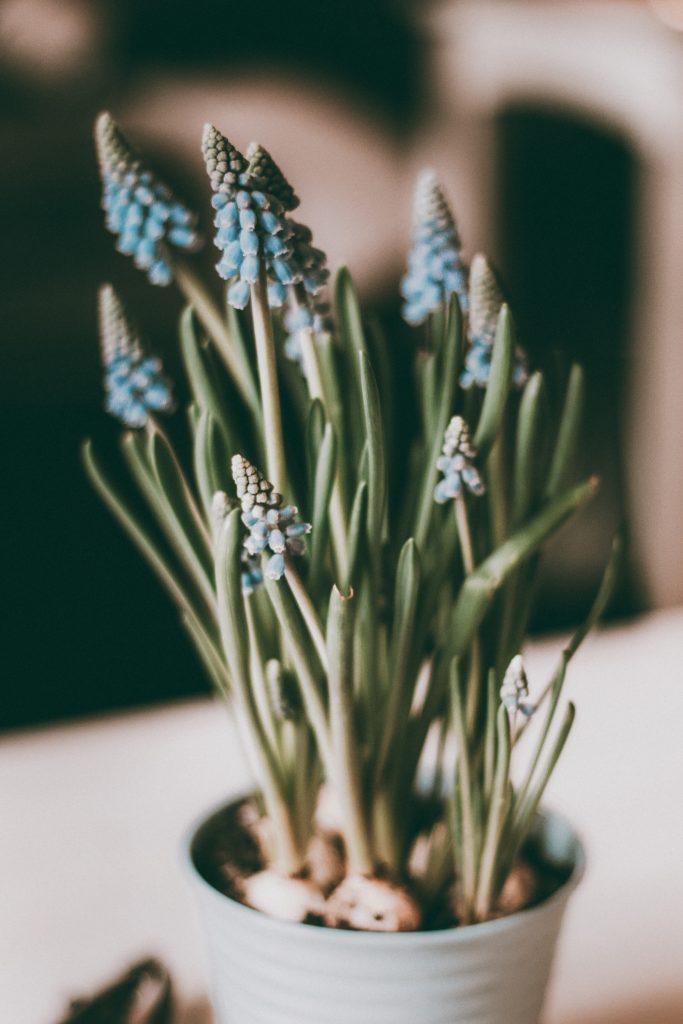 Februar Aktivitäten Frühlingsblumen